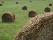 El bioetanol y la biomasa crecen por encima de la media en Navarra
