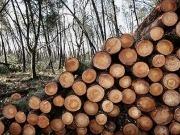 La biomasa coge impulso en Extremadura