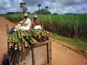 En Brasil, la electricidad con biomasa es la segunda fuente más importante y supera al gas