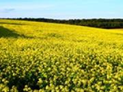 """""""La bioenergía sostenible, clave en la transición de Europa hacia un modelo energético renovable y eficiente"""""""