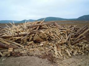 El Parlamento Europeo pide a la UE que ahonde en la producción sostenible de combustibles de madera