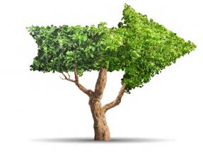 La investigación europea en bioenergía diseña una senda para contribuir a descarbonizar con sostenibilidad