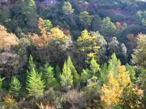 Dieciséis nuevas calderas y cuatro centros logísticos para reforzar la biomasa en el Pirineo ilerdense