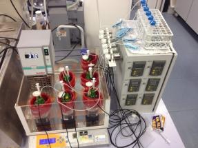 La Universidad de Jaén desarrolla una técnica para producir bioetanol con el azúcar del hueso de aceituna