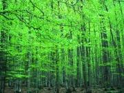 Navarra creará 1.650 empleos gracias a la biomasa forestal