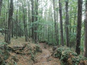 Juntos por los Bosques pide evitar la competencia de la bioenergía forestal con algunos usos industriales de la madera