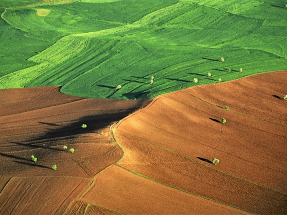 El IPCC cree en la bioenergía para luchar contra el cambio climático con una buena gestión de la tierra