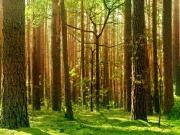 Biomasa y gestión forestal sostenible como alternativas a la deforestación global