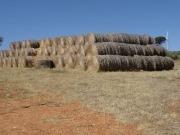 En plena sequía reclaman para el ganado la paja de las centrales de biomasa