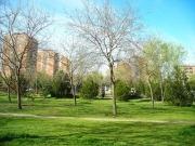 La energía de los árboles urbanos: mejor en calderas que en vertederos