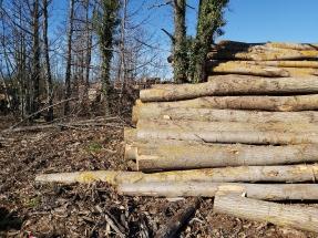 La biomasa española roza su ocho mil ansiado y se queda satisfecha