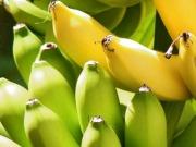 El plátano también puede ser fuente de electricidad y bioetanol