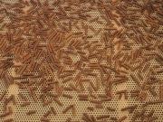 Record en 2015 de exportaciones de pellets de madera