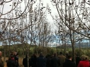 Proyecto europeo para sacarle mayor rendimiento a la biomasa forestal