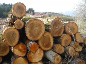 La UE quiere cero emisiones desde el sector forestal en 2030