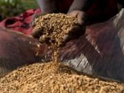 La FAO presenta 42 buenas prácticas en bioenergía en todos los continentes