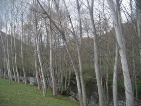 Aragón declara de interés autonómico dos plantas de biomasa de Forestalia
