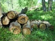 La biomasa sube en empleos y aportación al PIB