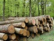 La biomasa térmica gana espacio en APPA