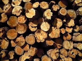 La biomasa se lleva casi el noventa por ciento de las ayudas a las renovables en Galicia