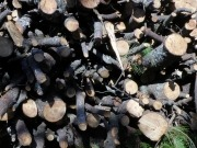 Elecnor se estrena con la biomasa con dos plantas de 15 megavatios en Portugal