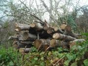 Aclareos de montes que benefician a las trufas, frenan al jabalí y producen energía