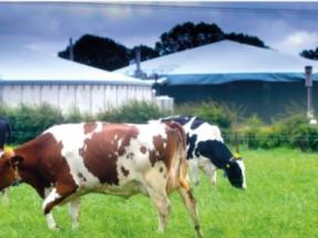 ¿Cómo se porta el PNIEC con la biomasa? ¿Y con el biogás? ¿Y con los biocarburantes?