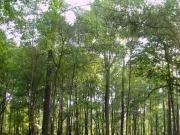 2,5 millones de euros en ayudas para la bioenergía en Extremadura