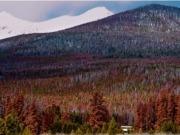 De árboles muertos por insectos a biomasa