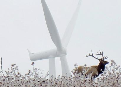 La eólica cumple su promesa y aporta cada vez más electricidad libre de CO2 al mundo