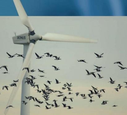 Entre seis y dieciocho millones de aves muertas cada año