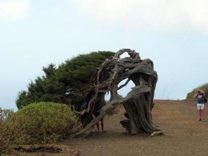 Canarias pide una prima eólica de 89 euros