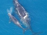Por las ballenas, se posterga un parque eólico offshore