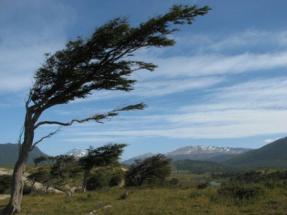 Forestalia cuenta ya con la autorización administrativa para 200 MW en Aragón