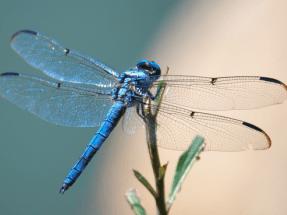 Las alas de los insectos inspiran aeorgeneradores un 35% más eficientes