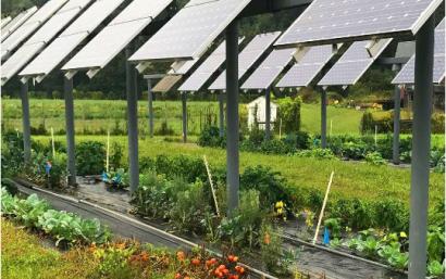 Agrovoltaica: como lograr la máxima sinergia entre agricultura y electricidad fotovoltaica