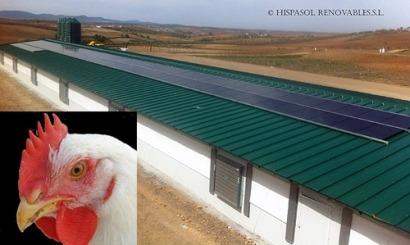 La granja de los pollos solares