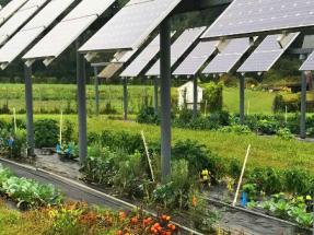 Agrovoltaica: cómo lograr la máxima sinergia entre agricultura y electricidad fotovoltaica