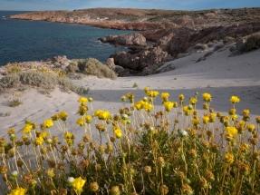Chubut: Bahía Bustamante,un enclave ecológico que asegura su futuro con la instalación de un sistema fotovoltaico