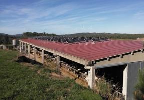 El autoconsumo fotovoltaico con compensación incrementa la rentabilidad de una ganadería gallega
