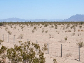 California: Autorizan tierras públicas para Palen, un proyecto fotovoltaico de 500 MW
