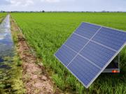 Chaco: Instalarán el mayor sistema solar de bombeo de agua