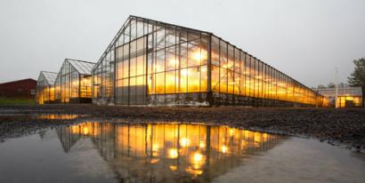La geotérmica pude ayudar (y mucho) a mejorar la seguridad alimentaria