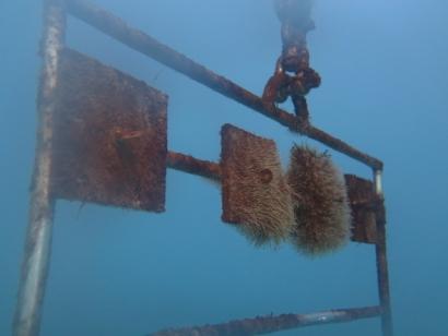 CHILE: Energía marina: Desarrollan procesos para evitar la incrustación de organismos en estructuras sumergidas