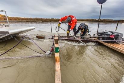 EEUU: Alaska: La universidad más importante del estado se alía con un laboratorio nacional para investigar las energías marinas