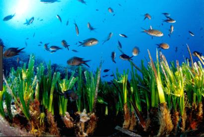 El Clúster Marítimo Español apuesta por el medio ambiente y la sostenibilidad