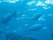 ¿Cómo impactan las energías renovables en el medio marino?