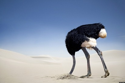 Avestruz-escondiendo-cabeza