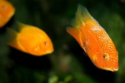 ¿Qué es el agua?, pregunta el pez