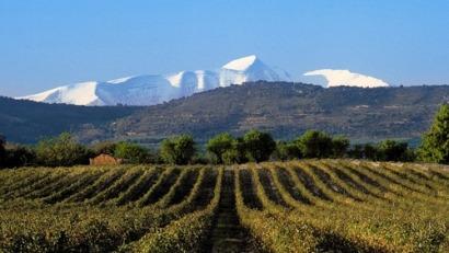 Life+ Rewind, un proyecto para demostrar lo que las renovables pueden aportar al sector vitivinícola